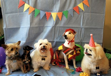 dogs birthday 30 cats and dogs who aren t ready to graduate