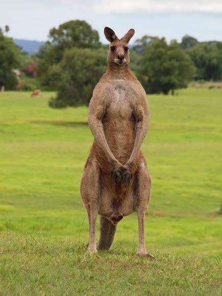 kangaroos levelling up sleeper hold unlocked page 2
