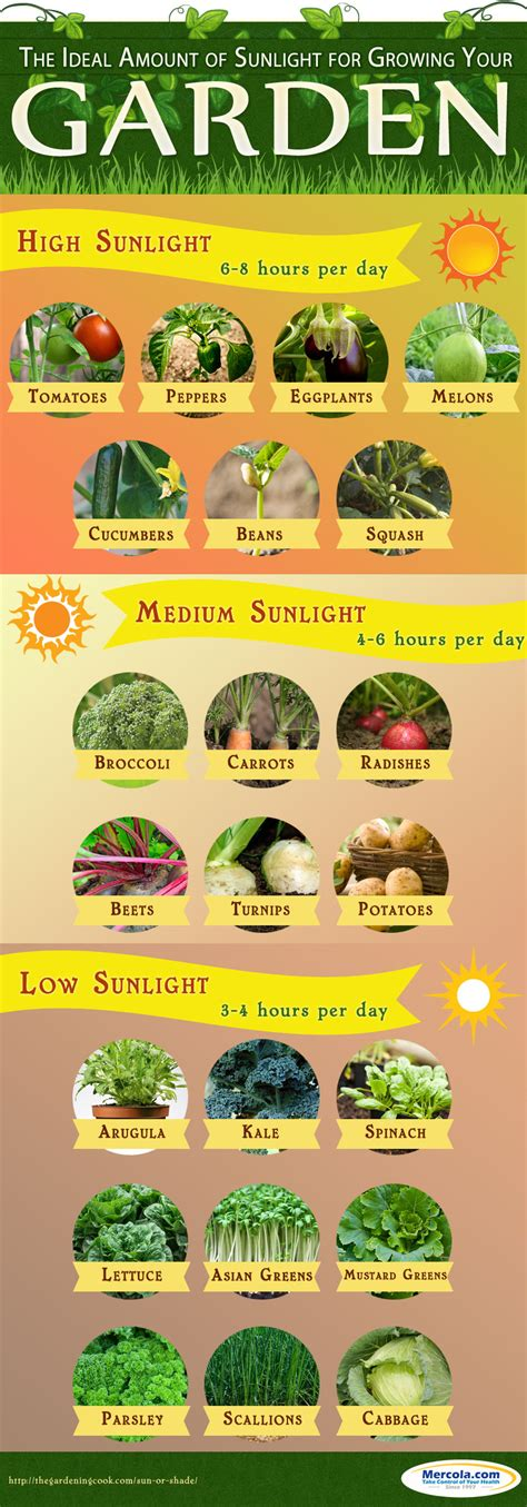 How Much Sunlight Does Your Garden Really Need Info How Much Sun Does A Vegetable Garden Need
