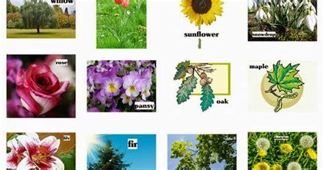 tanaman hias daftar nama latin tanaman