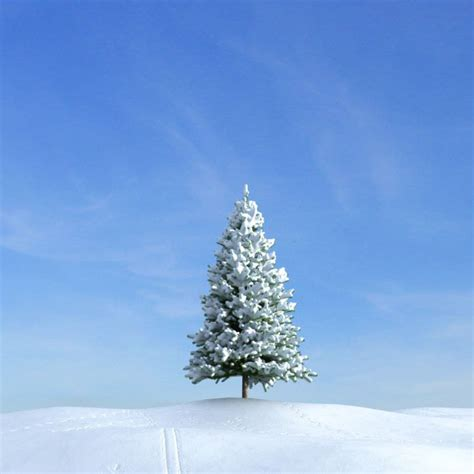 trees snow fir tree with snow 3d model cgtrader