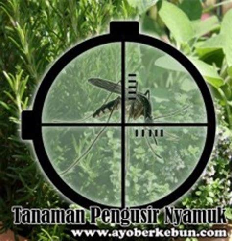 Jual Bibit Bunga Lavender Jakarta jual tanaman nyamuk tanamanbaru