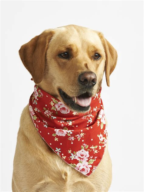 puppy bandanas top 10 bandanas for summer 2015