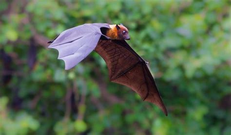bat pictures 11 images and facts about a misunderstood