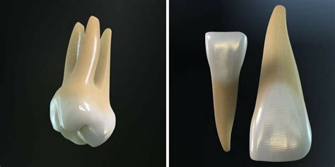 dentition  types  teeth