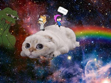 wallpaper tumblr cat lie tx me