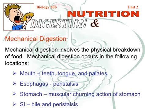 carbohydrates for grade 8 mechanical chemical digestion