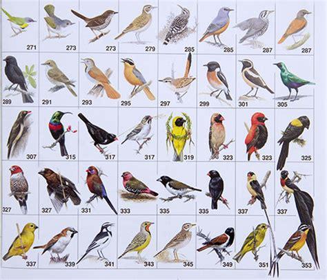 birds names more photos