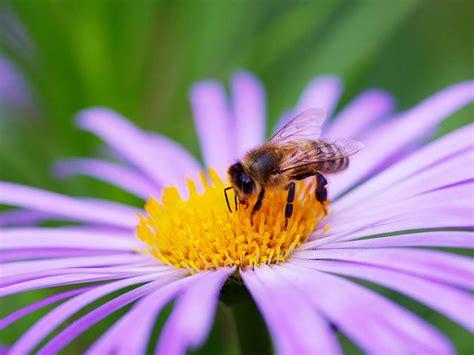 Bee Garden Flowers Make A Bee Friendly Garden Saga