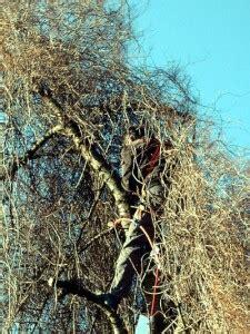 Kosten Baum Fällen 2847 by Baum F 228 Llen 187 Gartenbob De Der Gartenratgeber