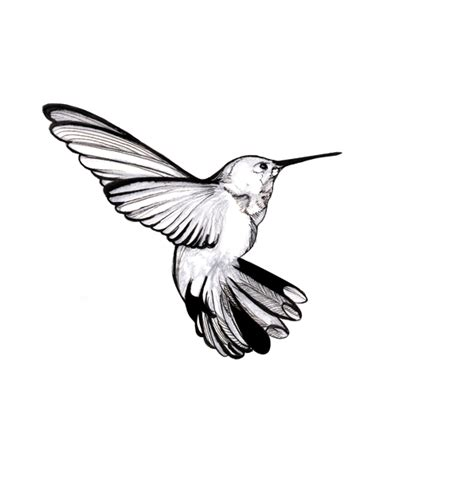 Hummingbird Outline by Tattoos Of Humming Bird Hummingbird