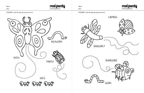 bed bug color coloring pages bugs real purdy