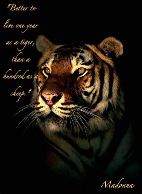 tiger quotes tiger quotes on quotes privacy quotes