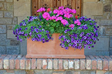 living flower arrangements outdoor potted flower arrangements www imgkid com the