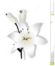 More similar stock images of easter lily