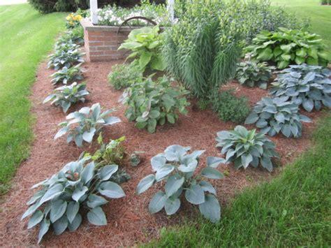 hosta flower beds creative ideas for flower bed borders using hostas