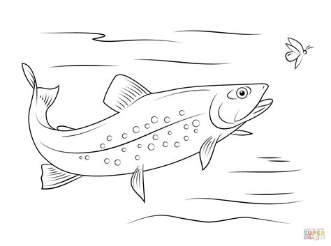 brook trout coloring page free printable coloring pages