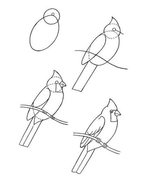 drawing birds learn to 1600583407 learn how to draw a cardinal bird with these easy steps is it obvious i m a little partial to