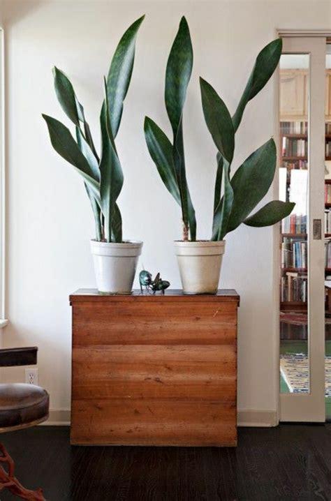 zimmerpflanzen gross sch 246 ne zimmerpflanzen bilder so k 246 nnen sie ihre wohnung