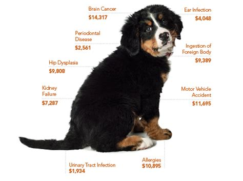 average cost of puppy insurance the best protection for dogs petplan
