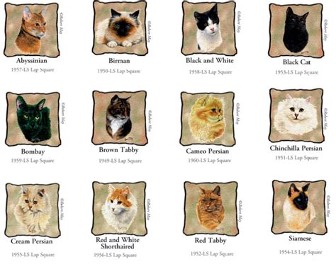 types of cats cat breeds images cats types