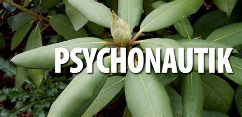gr npflanze gro e bl tter psychoaktive pflanzenkunde rhododendron hanfjournal