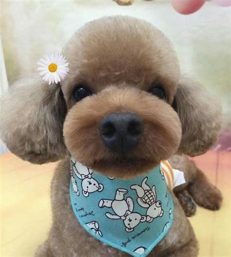asian cuts for dogs 271 best asian fusion grooming images on pinterest asian
