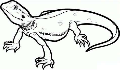 Lizard Coloring Pages To Print | free printable lizard coloring pages for kids