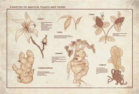 a selection of magical plants and herbs herbology class