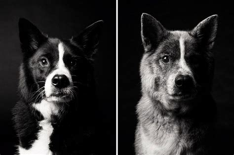 jones dogs heartmelting pics of aging dogs show them grow from puppyhood to age bored panda
