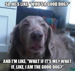 Stoned Dog Meme - meme watch 10 dog is the newest addition to the stoner