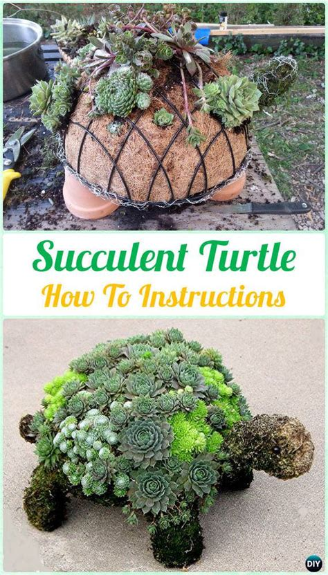 diy succulents diy indoor outdoor succulent garden ideas thinkhom