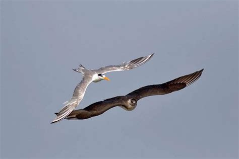pelagic bird watching in alibaug wild nest