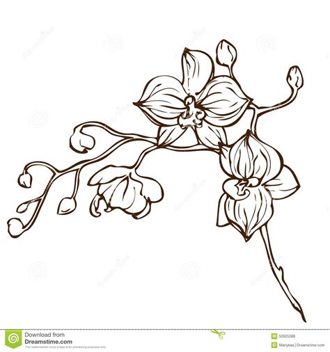 vector hand drawing orchid flower stock vector image