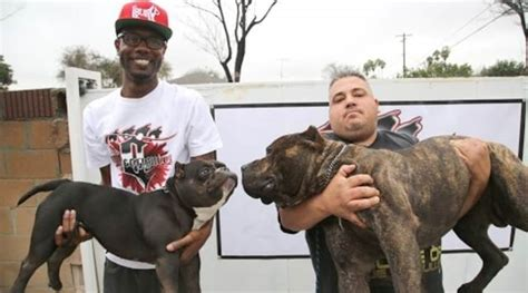 Records Herself With P Ssy In In The Nyc Subway Meet Quot Khalifa Quot The Micro Pit Bull Worth 75 000