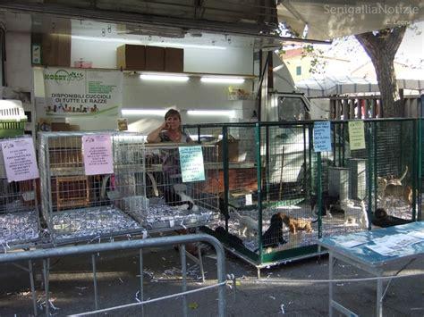 negozio animali roma fiera senza animali il comune di senigallia una