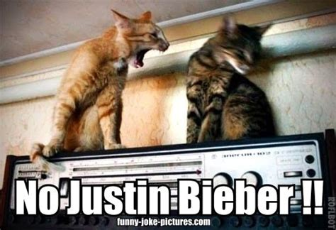 Angry Cat No Meme - funny no justin bieber angry cat meme joke picture humor