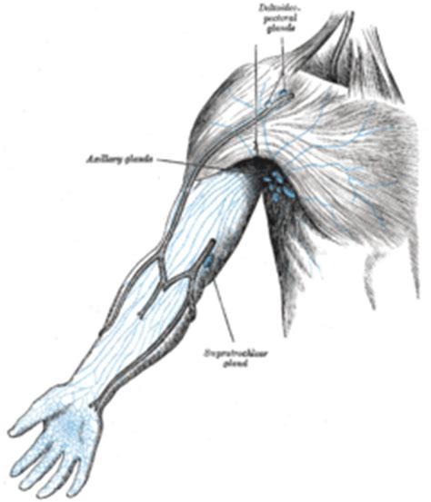 lymph node wikipedia gray606 png