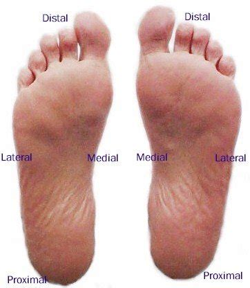 plantar foot mod labeled myfootshop