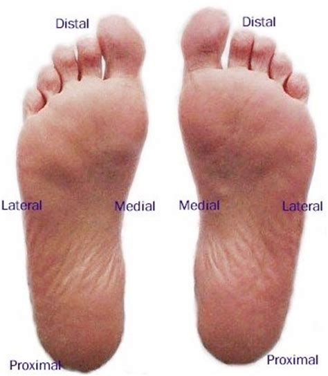 what is planters foot plantar foot mod labeled myfootshop