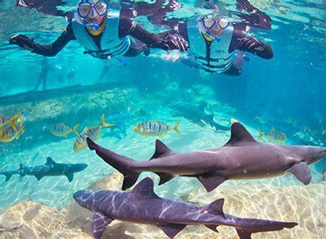 discovery cove shark swim at seaworld orlando orlando