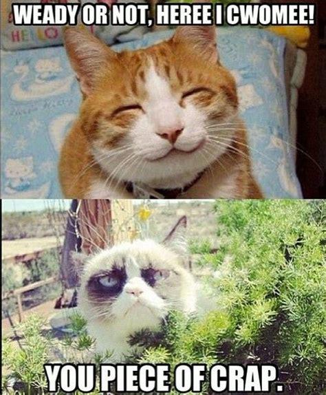 Very Funny Memes 2016 - grumpy cat funnies grumpy cat 4 president 2020