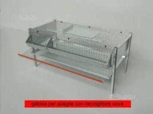 gabbie per quaglie a terra gabbie per quaglie ovaiole posot class