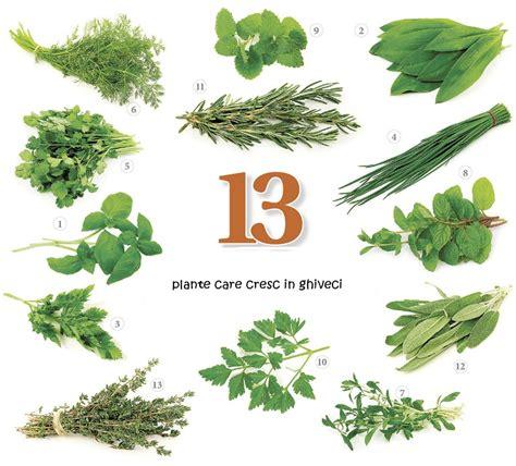 Cele 13 plante care fac minuni in bucataria ta!   Hartie
