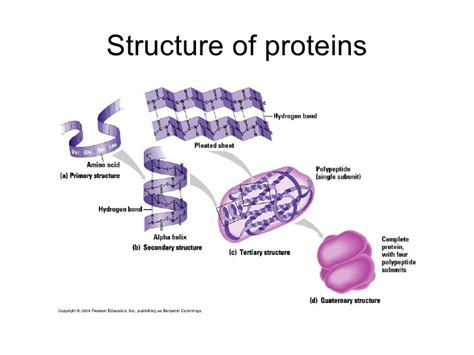 a protein is being assembled when what is protein give exles all about ketogenic diet
