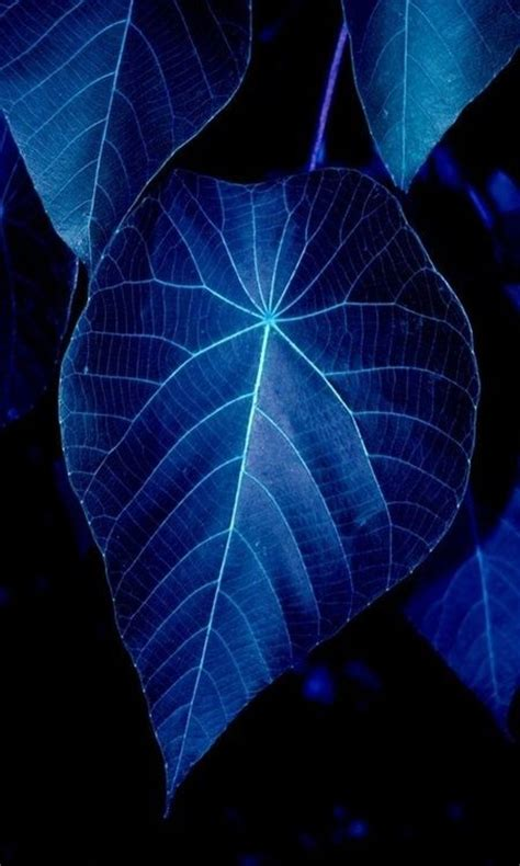 blue foliage plants blue veins blue world