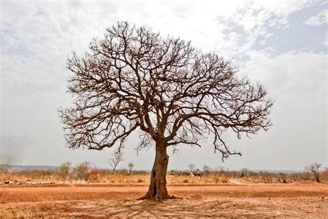 picture of day photo of the day lonely tree edward echwalu