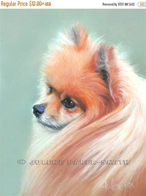 pomeranian rescue ma 883 best images about pomeranians on
