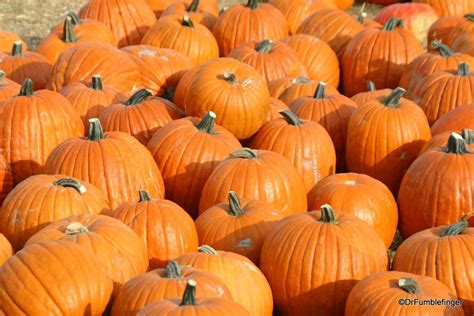 gumbo s pic of the day october 31 2015 the pumpkin gumbo s pic of the day october 31 2015 the pumpkin