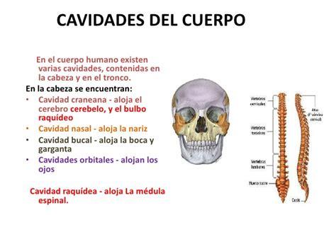 costillas del cuerpo humano cuantas costillas tiene el cuerpo humano keywordsfind com